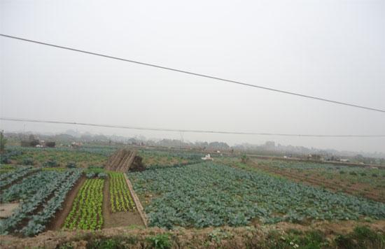 canh_dong_rau